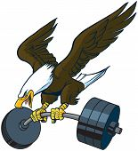 Vector cartoon clip art illustration of a bald eagle mascot diving or swooping down with spread wings and a barbell weight in its talons. poster