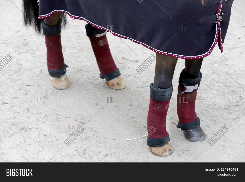 quality design bd919 4e0f0 Four Beautiful Hooves Image & Photo (Free Trial) | Bigstock