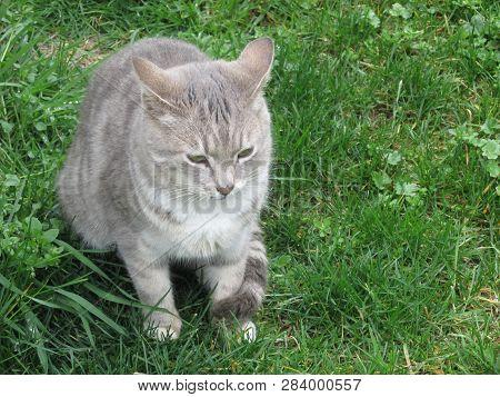 Zonguldak Turkey Cat In The Park In Winter