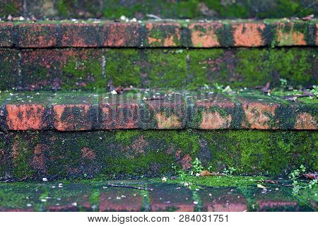 Red Brick Stairs, Covered With Moss And Clover Close Up