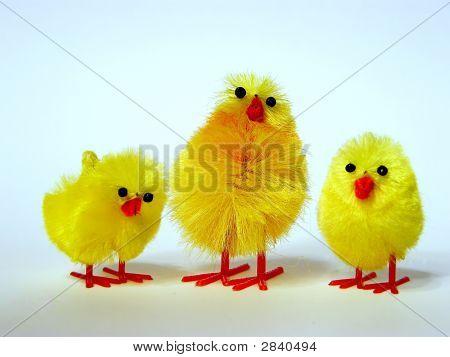 Three Easter Fledglings