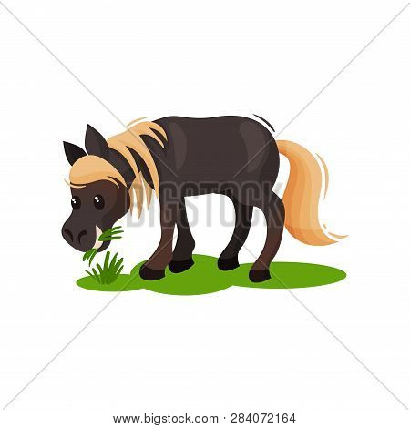 Lovely Pony Eating Green Grass. Little Black Horse With Blonde Mane And Tail. Hoofed Mammal Animal.