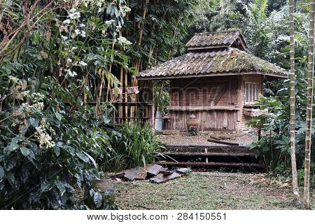 An Old Style Chinese House Sits In A Garden. Pines And Well Maintained Trees Surround The House With