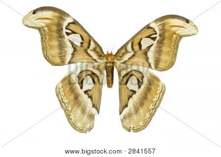 Isolated Moth
