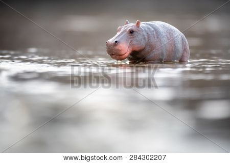 An image of a toy hippopotamus in the water