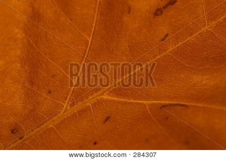 autumn leaf background poster