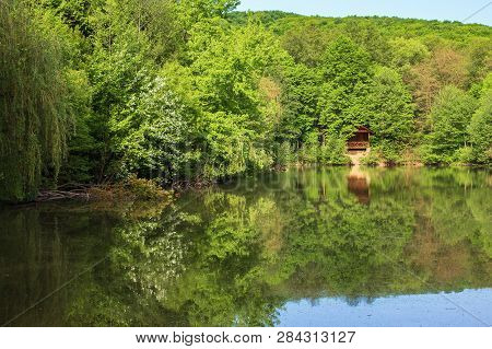 Pond In The Park. Beautiful Springtime Scenery. Beech Forest On The Shore Reflecting In The Water Su