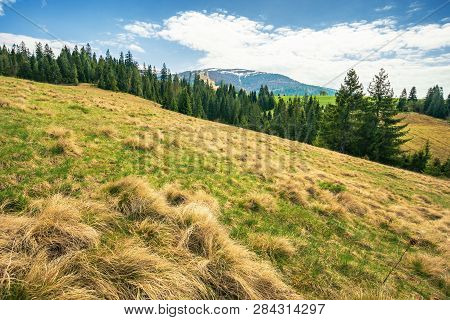 Early Springtime Countryside In Mountains. Pine Forest On A Meadow. Pasture With Weathered Grass. Hi