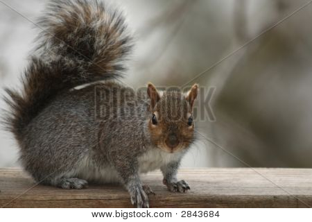 Rocky The Squirrel Returns