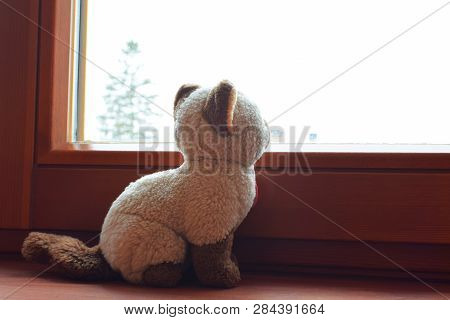 Cat toy sitting on brown wooden window sill looking outside and waiting for something, profile view. Loneliness concept. poster