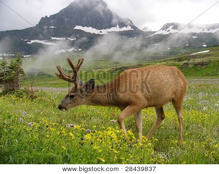 Deer and Meadow