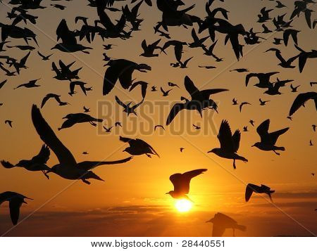 Bird Sunrise