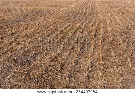 Agricultural Field With Harvested Soy-bean At Fall Season In Sumskaya Oblast, Ukraine