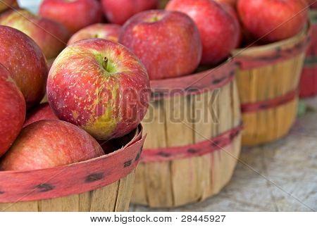 apples in bushel baskets