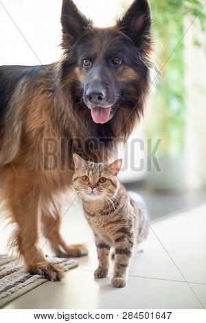 Cat and dog living together. Friendship between animals.