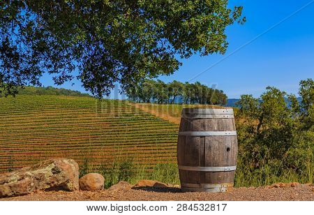 Rows Of Grape Vines On Rolling Hills With A Wine Barrel In The Foreground At A Vineyard In The Sprin