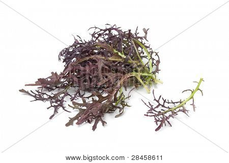 Purple Mizuna leaves on white background