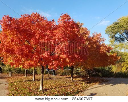 Fall Landscape - Fall With Colorful Fall Trees And Fallen Fall Leaves Covering The Ground, Fall Tree