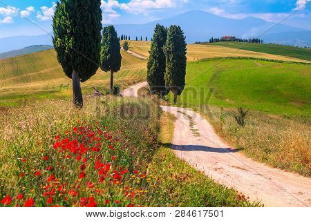 Spectacular Tuscany Summer Landscape With Red Poppies, Agricultural Grain Fields And Winding Road Ne