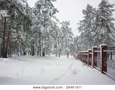 Pine-covered High Layer Of Snow. Brick Wall On The Right