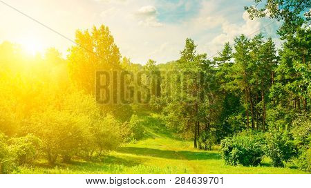 Natural Forest With Coniferous And Deciduous Trees, Meadow And Footpaths. Summer. In The Blue Sky Th