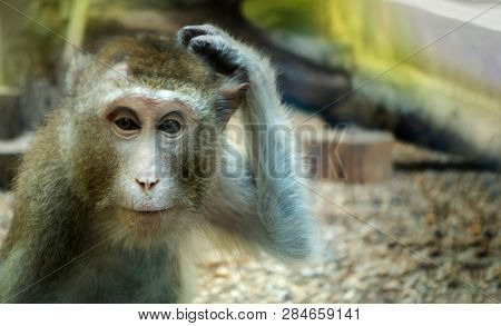 monkey scratching his head, the animal began to think.