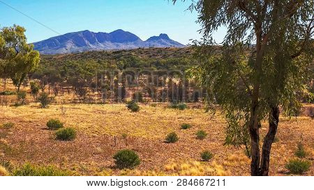 A Morning Shot Of Mount Sonder And Gum Trees In The Nt