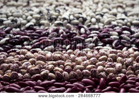 Different Types Of Beans - Kidney, Variegated Beans, Anasazi, Background. Leguminous, Red, White, Be