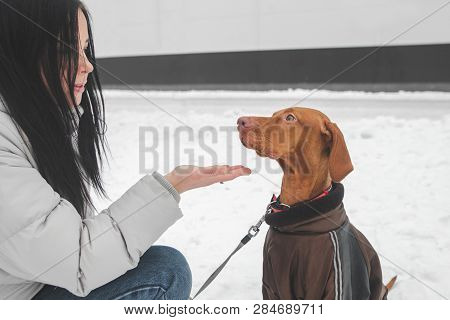 Portrait Of A Girl In Warm Clothes And A Dressed Dog On A Winter Walk, Girl Gives The Dog A Hand. Be