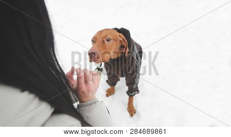 Young Girl Playing With A Dog On A Snowy Winter Day. Walking With The Dog In The Winter Season. Owne