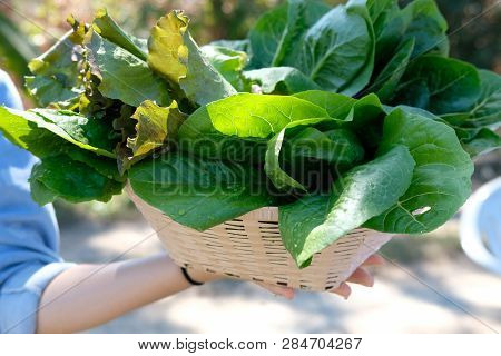 Hand Holding Basket With Fresh Vegetable From Farm