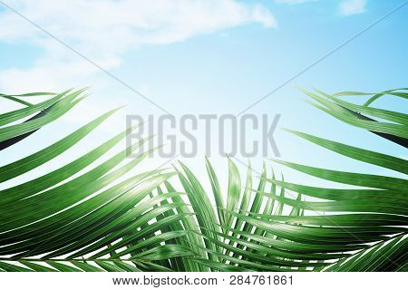 Palm Branches With Green Leaves Against Blue Sky Background. Palm Sunday Concept