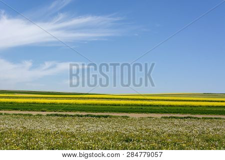 Spring Landscape Of The Roztocze Region In Poland With Agricultural Fields Of Rapeseed Yellow Flower