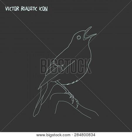 Nightingale Icon Line Element. Vector Illustration Of Nightingale Icon Line Isolated On Clean Backgr