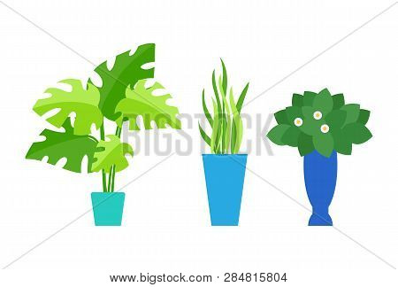 Cafe Interior Floral Decor, Indoor Plants In Pot Vector. Palm Leaves And Grass Or Bush With Blossom,