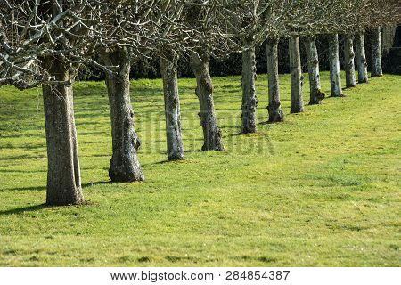 Line Of Trees On Grass In Strong Sunshine