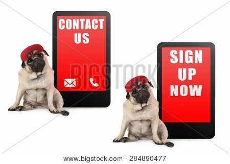 Cute Pug Puppy Dog Looking Smart, Sitting Next To Tablet Phone With Text Contact Us And Sign Up Now,