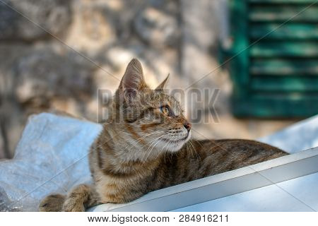 A Gray And White Tabby Kitten Sits In A Dumpster Inside The City Walls Of Kotor, Montenegro, The Cit