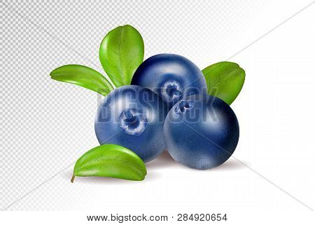 Blueberries On Transparent Background. Quality Realistic Vector, 3d Illustration