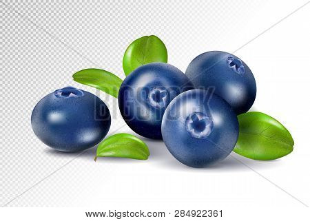 Blueberries Isolated On White Background. Quality Realistic Vector, 3d Illustration