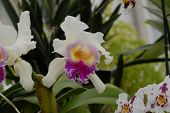 Nikon D200 DSLR Orchid Hothouse greenhouse plants poster