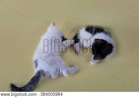 Close-up Portrait Of Kittens. Beautiful Animals Shot On A Yellow Background. Lovely Kids. Black And