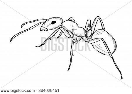 Hand Drawn Ant Sketch. Simple Style. Vector Isolated