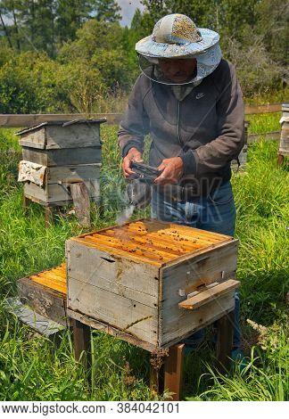 Yabogan. Russia. August 07, 2020. Apiary. A Beekeeper With A Special Vessel With Smoke Calms The Ala