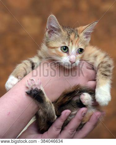 Sad Miserable Homeless Kitten In Hands In Shelter