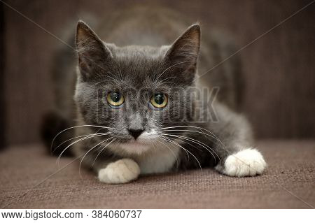 Gray Cat With White Cat