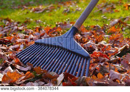 Rakes And Leaves In The Harsh Autumn Sun. Autumn Garden Work.
