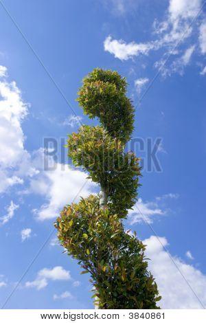 Twisty Treed