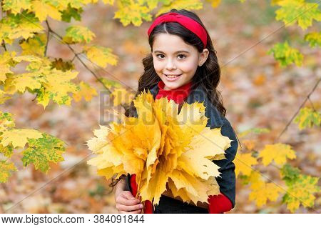 Carefree Morning. Beauty Of Nature. Kid In Autumn Park. Cheerful Girl With Yellow Maple Leaves. Happ