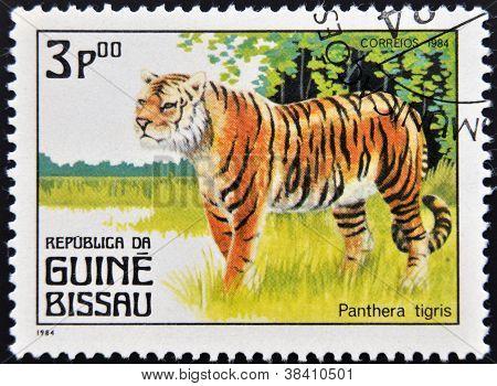 GUINEA BISSAU - CIRCA 1984: A stamp printed in Guinea shows panthera tigris circa 1984